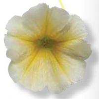 Viva_Yellow